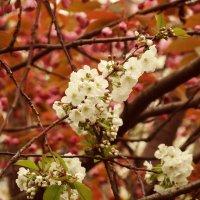 Скоро весна :: Алексей Соминский