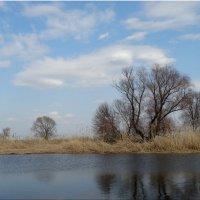 Март у реки... :: Тамара (st.tamara)