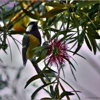 Птичка2-из серии«Наши пернатые друзья!» :: Shmual Hava Retro
