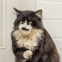 Муромский кот :: Марина Назарова
