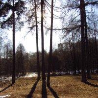 IMG_3801 - Линии жизни :: Андрей Лукьянов