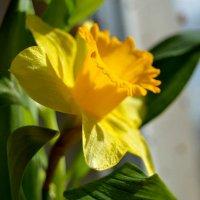 Цветок :: Наталья (ShadeNataly) Мельник