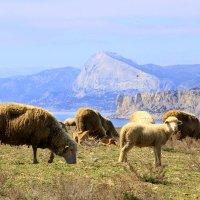 Пастбище в горах :: Геннадий Валеев