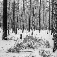 Зимний лес :: Артем Ступаков