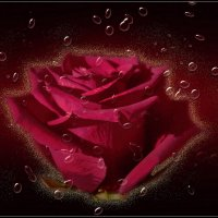 Омар Хайям о розе......... :: galina tihonova