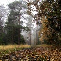 За калиткой осень... :: lenrouz