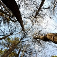 Весеннее небо! :: Михаил Столяров