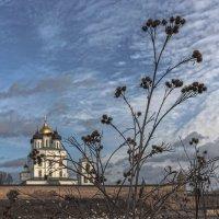 Репей береговой, обыкновенный... :: Виктор Грузнов