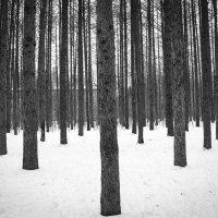 Лес :: Катя Раймер