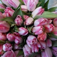 Розовые тюльпаны :: Svetlana27
