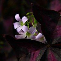 Ботанический сад :: Полина