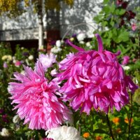 Осенние цветы :: Ольга