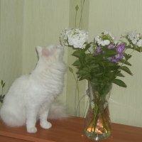 Любят девочки цветы :: Владимир Ростовский