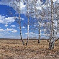 Весна :: Геннадий С.