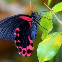 Бабочка :: оля san-alondra
