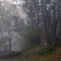 Утро у озера :: Юрий Цыплятников