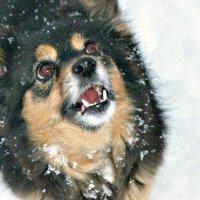 Про собачку и... мартовский снег :: galina tihonova