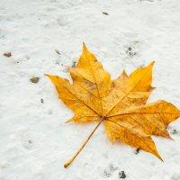 Осень :: Евгений Кузьминов