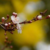 Весенние цветы :: Елена Мартынова