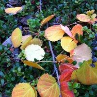 листья :: Андрей Шипицын