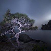 Ночные чудеса Нового Света :: Роман Любимский