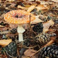 Осень в лесу :: °•●Елена●•° Аникина♀