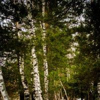 лес :: Анна Никонорова