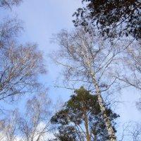 Весеннее небо , чистое и голубое . :: Мила Бовкун