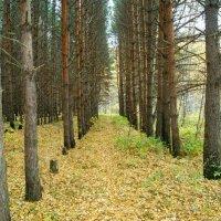 Любимый лес :: EDO Бабурин