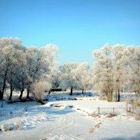зима в п-посаде :: лена григорьева