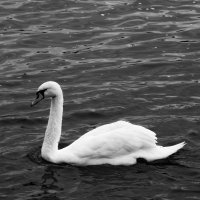 Черно-белое :: Евгения Юркова