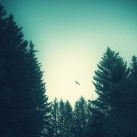 Идет охота! :: (A-Eagle) Андрей Орлов
