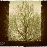 Дерево :: Fededuard Винтанюк