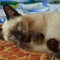 Meow :: Юлия Красноперова