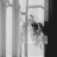 Солнечное  окно... остатки  марта.... :: Валерия  Полещикова