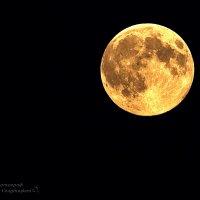 Апельсиновая луна :: Инна Голубицкая