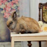 Кролик Михаил :: Юлия Богданова