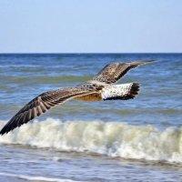 полет чайки :: Olga Kolmychenko
