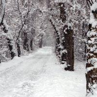 снег. опять зима вернулась. :: Горный турист Иван Иванов
