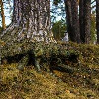 """Дерево"""" :: Алина Юдина"""