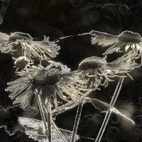 хоровод нефритовых цветов :: Galina