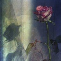 Ни холод, ни ветер, ни гром, устрашая, её не отвёл от окна :: Ирина Данилова