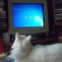 Ну кто сказал, что кошки не любят компьютер?! :: Владимир Ростовский