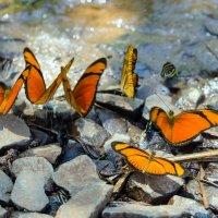 Бабочки :: Irina Shtukmaster