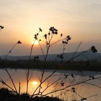 Закат солнца :: Алёна Ельцова