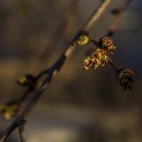 пришла весна :: аннушка