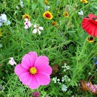 разноцветье :: Olga