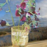 О цветах,которых нет названья.... :: galina tihonova