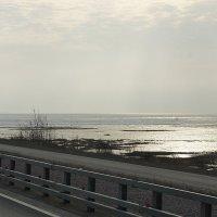 Вид на Финский залив с Дамбы :: Елена Павлова (Смолова)