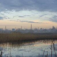 В сиреневом тумане :: Ксения Довгопол